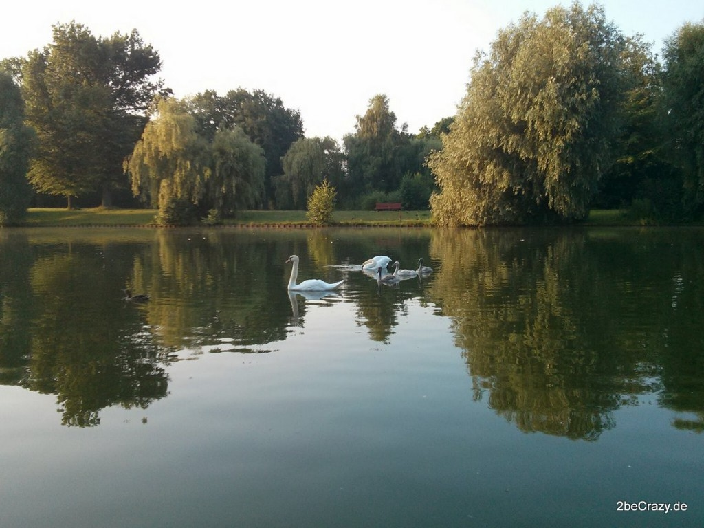 Schwan-Volkspark-Mariendorf (21)